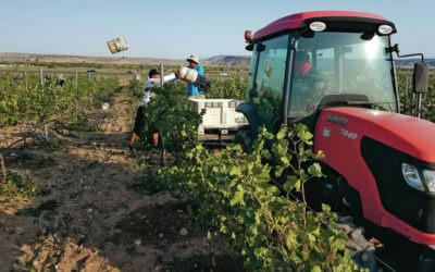 Santa Ana Diversifies Agricultural Investments With Wine Enterprise